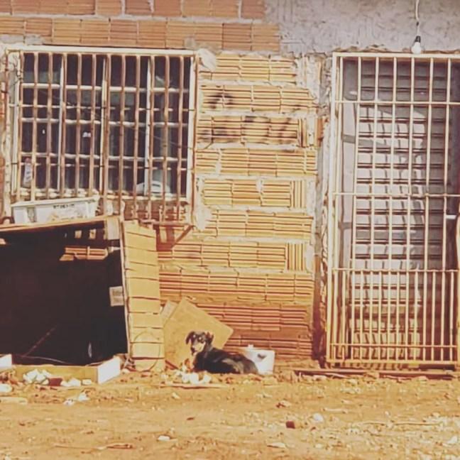 Janela do imóvel onde animais estavam, conforme a investigação — Foto: Polícia Civil/Divulgação