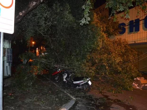 Motocicletas ficaram sob árvore caída (Foto: Marcelo Marques/ G1 RR)