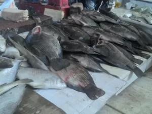 Tambaqui é um dos peixes mais procurados da Semana Santa (Foto: Larissa Vasconcelos/G1)