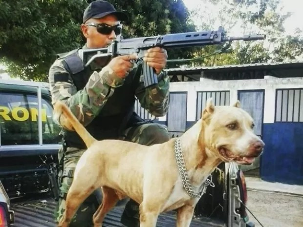 Bradock atuava como cão de guarda no batalhão do Gefron-MT (Foto: Divulgação/Sesp-MT)