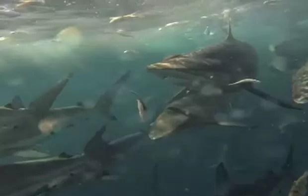 Embarcação foi perseguida por centenas de tubarões durante pesca na Austrália (Foto: Reprodução/YouTube/dimboon)