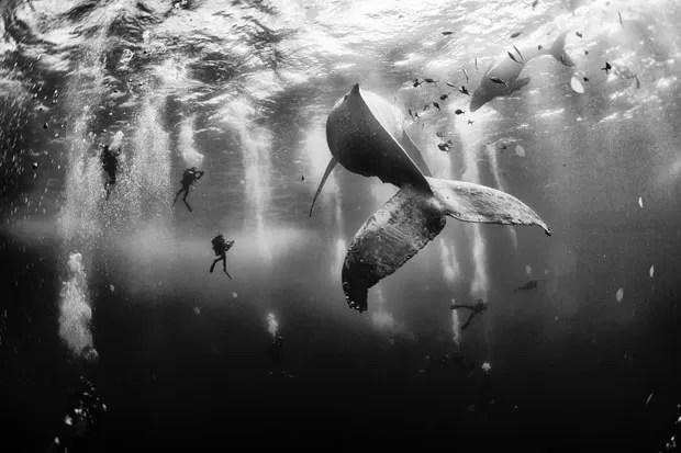 Traveler Photo Contest 2015  (Foto: Divulgação )