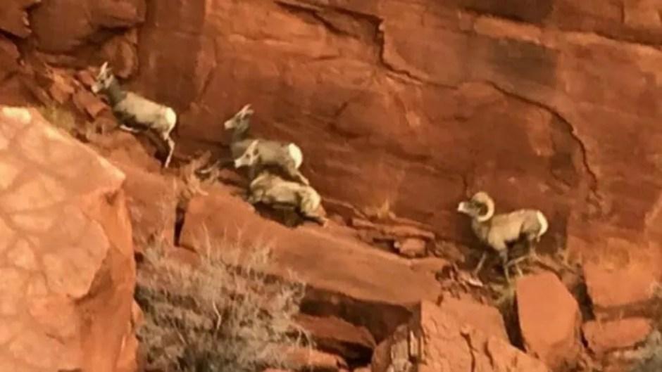 Estrutura foi vista do alto por um biólogo que monitorava rebanho de ovelhas no local — Foto: Departamento de Segurança Pública de Utah/BBC