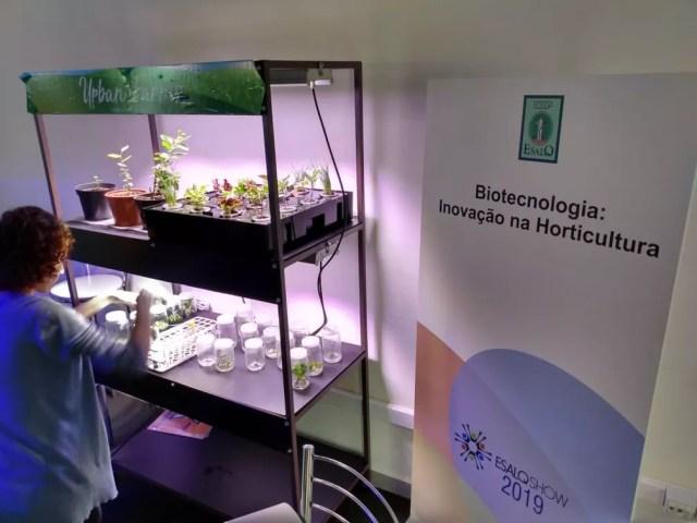 LED usado em cultivo pela Esalq/USP torna jardim cerca de 60% mais barato em pesquisa de Piracicaba — Foto: João Alvarenga/EPTV