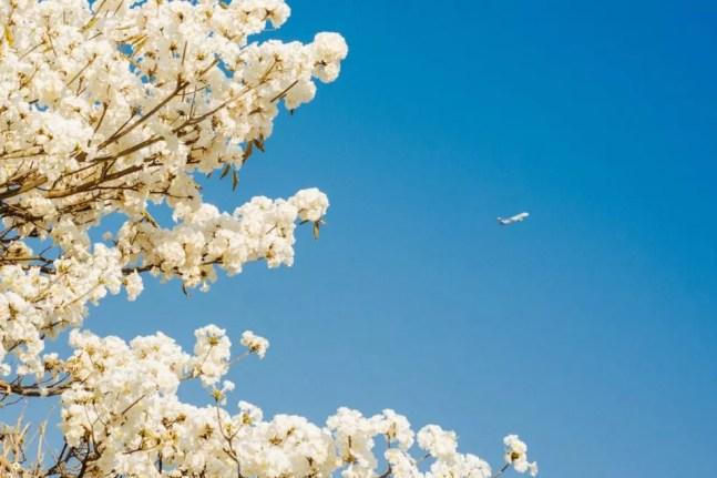 Ipês-brancos, o céu de Campo Grande e o avião. Uma das primeiras fotos de Kelsson pós doença. — Foto: Roberto Kelsson/Reprodução