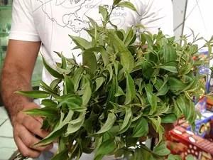 Folha desata nó é usada em simpatia para afastar coisas ruins e atrair boas energias. Bahia (Foto: Lílian Marques/ G1)