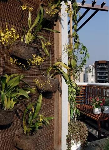 Os exemplares de chuva-de-ouro dão vida ao painel. a espécie gosta de sol e floresce uma vez por ano (Foto: Evelyn Müller)
