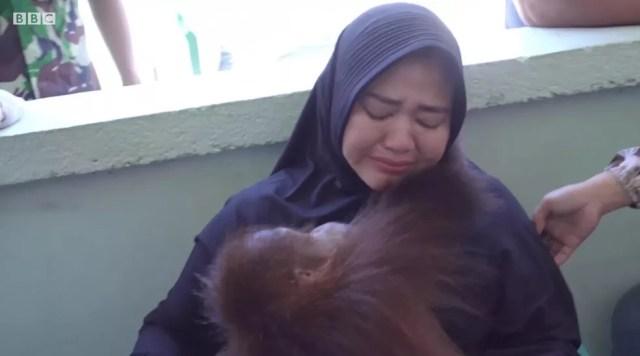 Mulher chora ao ser separada de seu orangotango de estimação — Foto: BBC