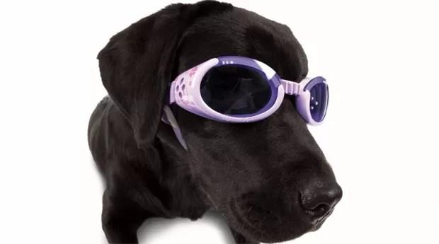 O cachorro de Roni Di Lullo serviu de inspiração para o produto Doggles (Foto: Divulgação)