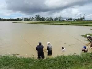 Peixes-boi em estágio de pré-soltura vivem em um lago de 14 hectares em Manacapuru (Foto: Jamile Alves/G1 AM)