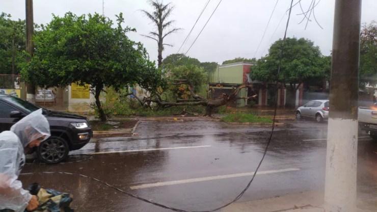 Rede elétrica foi danificada após vendaval o que interrompeu fornecimento de energia para centenas de casas. — Foto: Redes Sociais