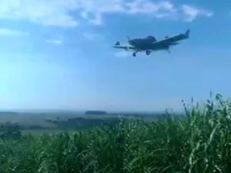 Avião faz pulverização com agrotóxico em canavial de Porto Ferreira (Foto: Reprodução/EPTV)