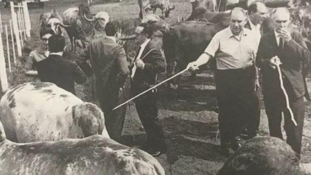 Inicialmente usado no Brasil para produção de carne e leite, gado Gir se especializou na atividade leiteira (Foto: BBC)