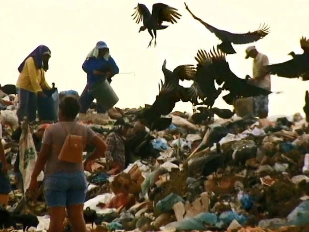Os catadores disputam espaço com os urubus no aterro sanitário para garantir a sobrevivência (Foto: Reprodução/TV Roraima)
