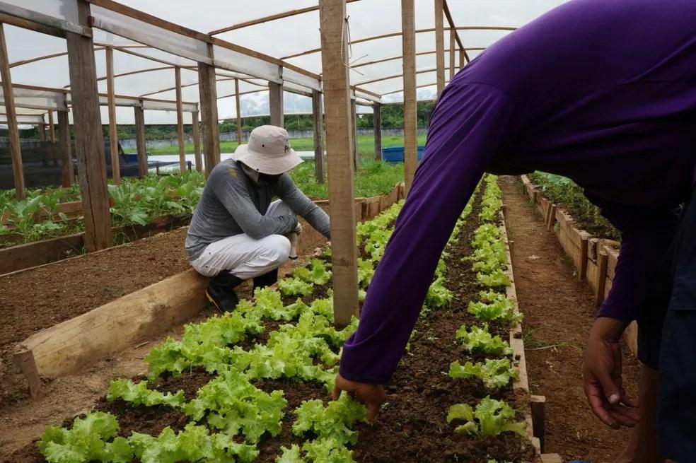 Ideia é fazer com que os presos trabalhem para ganhar um salário mínimo  — Foto: Elenilson Oliveira/Asscom Iapen