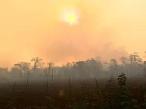 Intenso calor fortaleceu o fogo, que destruiu mais de 50 hectares da mata, em Ribeirão Preto (Foto: Ronaldo Gomes/EPTV)