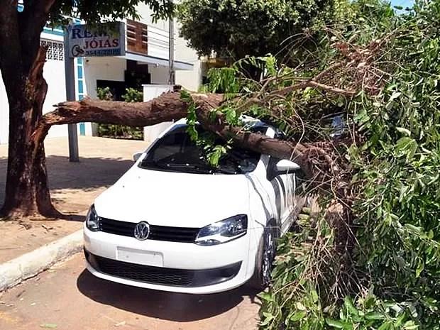 Parte de árvore caiu sobre veículo que estava estacionado próximo a veículo (Foto: Ederson Zimmer)