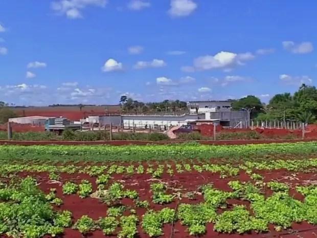 Seca prejudicou produção rural em Tangará da Serra (Foto: Reprodução/TVCA)