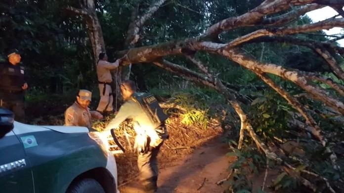 Árvores são derrubadas para impedir agentes do Ibama e atingem fiação elétrica. — Foto: Reprodução / TV Liberal