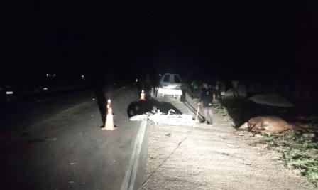 Motociclista morre após se chocar com cavalo na BR 316, em Trindade — Foto: Polícia Rodoviária Federal