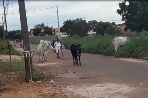 Animais andam ao lado dos pedestres nas ruas de Guaraí — Foto: Divulgação/Defensoria