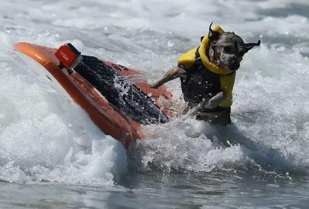 Cachorro leva tombo enquanto surfava onda na Califórnia. (Foto: Lucy Nicholson/Reuters)