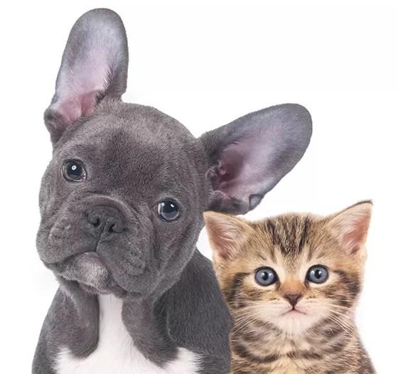 Resultado de imagem para Gatos vs cães
