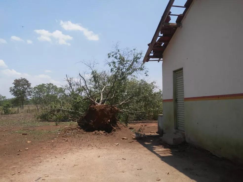 Árvore foi arrancada pela raiz com a força do vento — Foto: João Carlos Lopes/Defesa Civil de Talismã