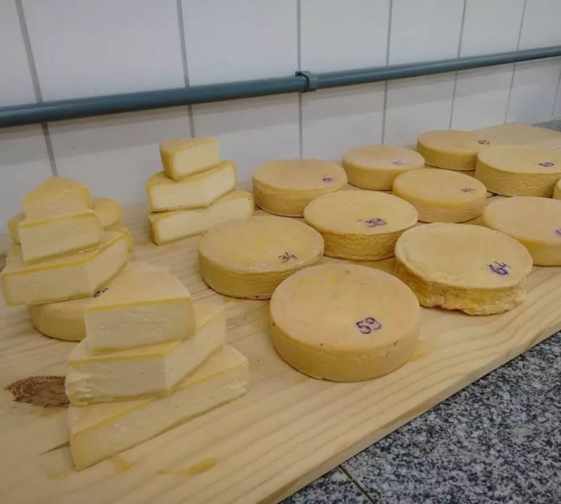Pesquisas aprimoram queijo artesanal mineiro no Campo das Vertentes  — Foto: Daniel Pereira/Governo de Minas