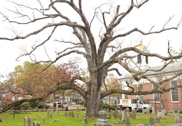 Carvalho era considerado a uma das árvores mais antigas dos Estados Unidos (Foto: Reprodução/Facebook/Basking Ridge Presbyterian Church)