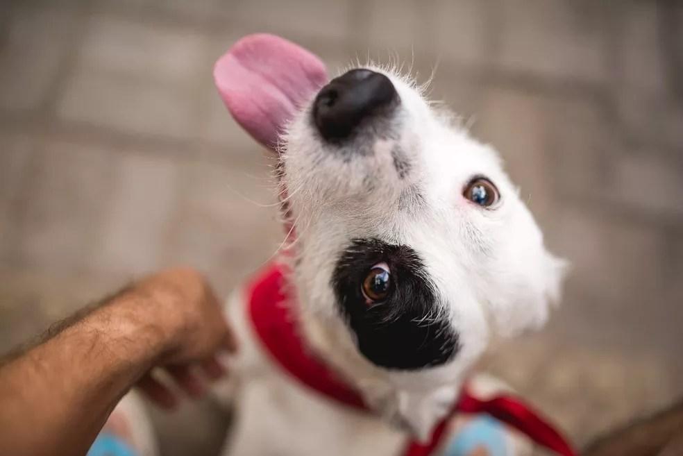 Cachorro é um dos principais atingidos pela doença (Foto: Gui Soares/Arquivo Pessoal)