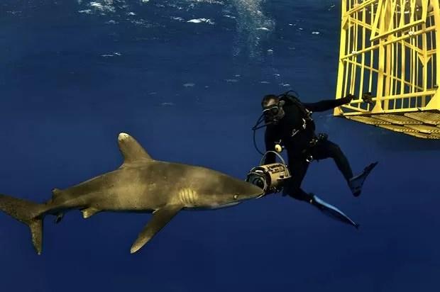 Brian Skerry arrisca a vida nadando ao lado de algumas das criaturas mais perigosas do mar. (Foto: Brian Skerry/Caters)