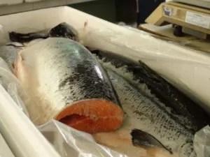 Salmão está entre os peixes preferidos pelos piracicabanos (Foto: Eduardo Guidini/G1)