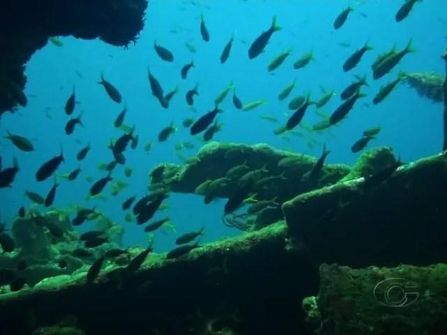 Mergulho no fundo do mar em Alagoas revela riquezas naufragadas há anos (Foto: Reprodução/TV Gazeta)