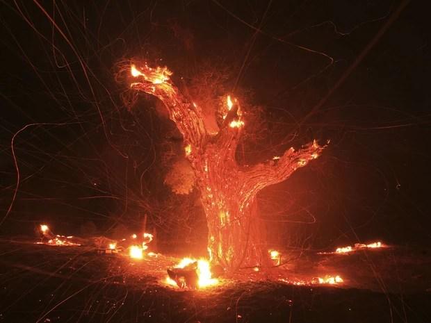Vento sopra cinzaz de um tronco de carvalho consumido pelo fogo perto de Banning, na Califórnia. (Foto: David McNew/Reuters)