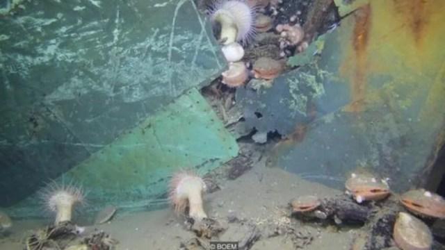 Um naufrágio no fundo do Golfo do México (Foto: BOEM via BBC)
