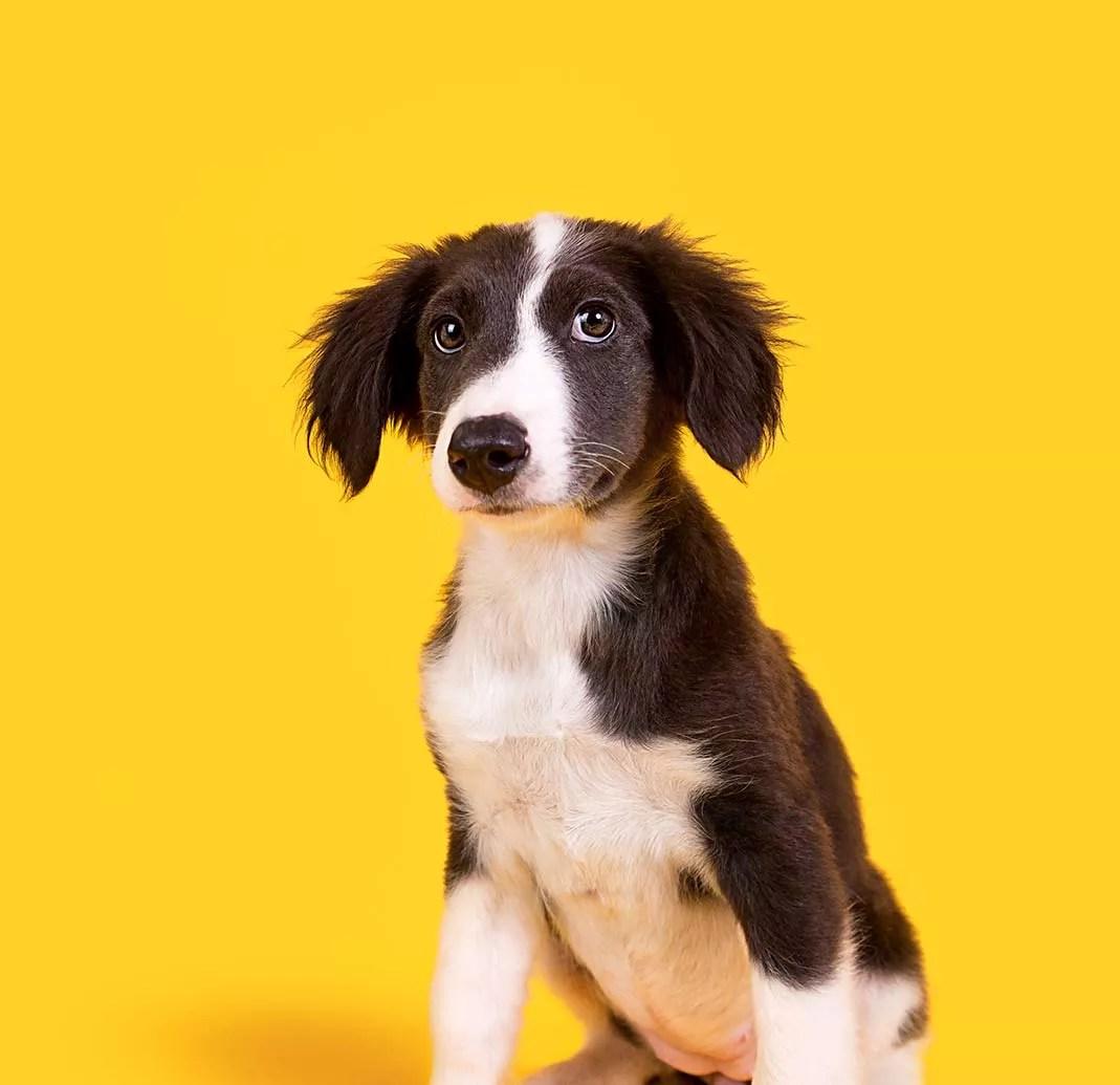 Idosa Que Nao Gostava De Pitbull Do Vizinho Muda De Opiniao Quando O Cachorro Salva Sua Vida Catioro Reflexivo