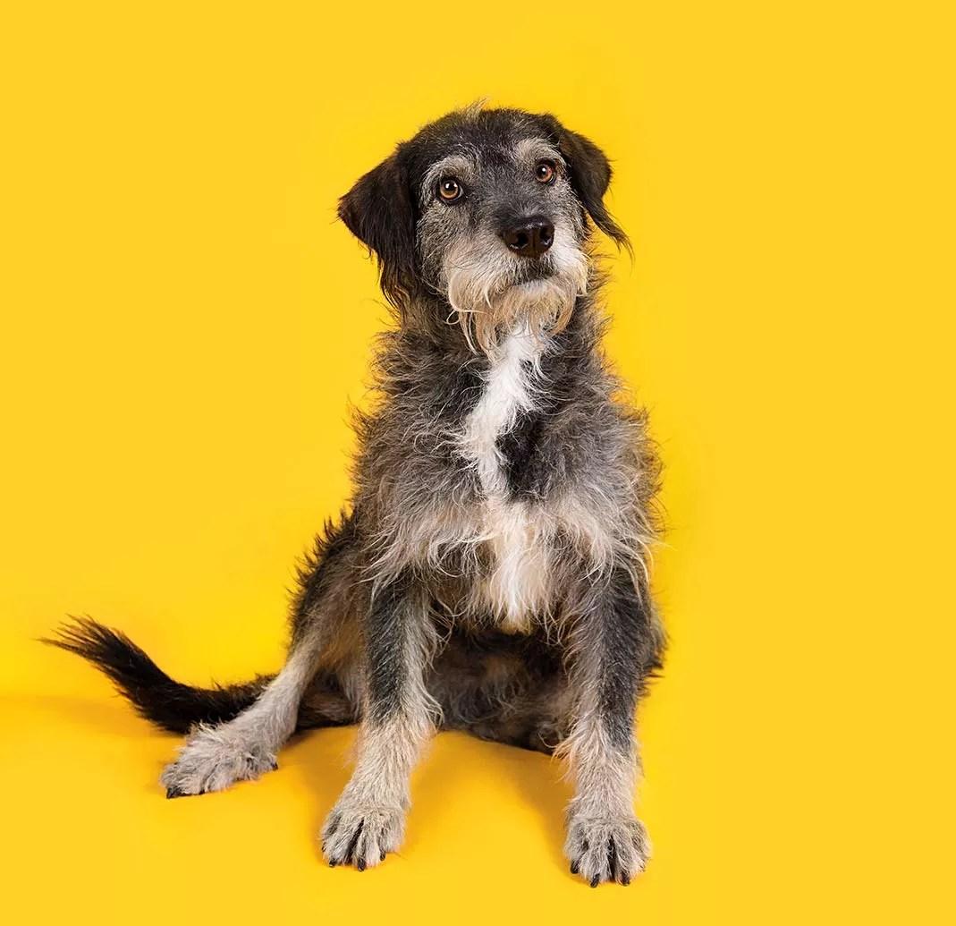 Como Separar Uma Briga De Cachorros Dicas Petlove