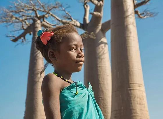 Resultado de imagem para baobás em recife