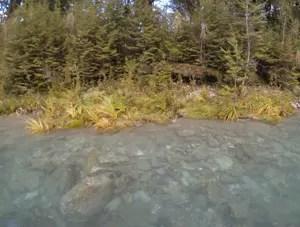 Água é bastante rasa em alguns pontos do rio Dart (Foto: Juliana Cardilli/G1)