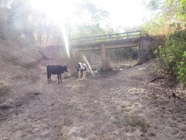Local onde aparece o gado já foi um curso d'água (Foto: Defesa Civil/ Divulgação)