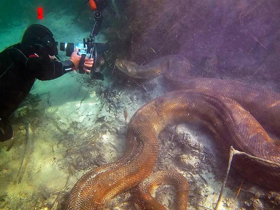 Mergulhadores estrangeiros captam imagens subaquáticas de sucuri — Foto: Daniel De Granville / Photo in Natura