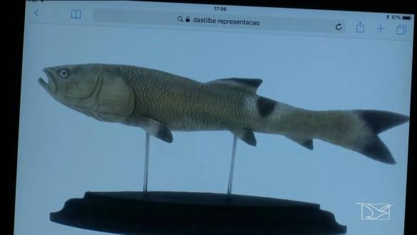 Espécie de peixe correspondente a fóssil encontrado em uma região de lago de Presidente Dutra — Foto: Reprodução/TV Mirante