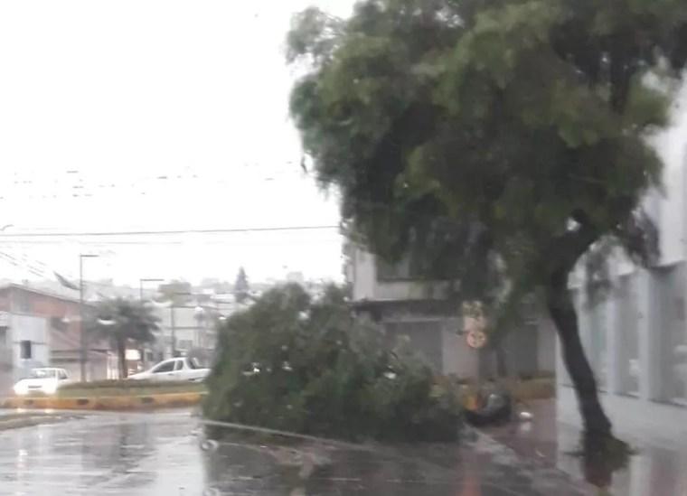 Árvores caíram nas ruas de Xaxim — Foto: Defesa Civil/Divulgação