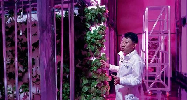 Construído na década de 70 e abandonado em 2002, um túnel no condado de Okcheon, a cerca de 200km de Seul, na Coreia do Sul, abriga a NextOn. Em uma área de 2,3 mil metros quadrados, sob o comando de Choi Jae-bin, a fazenda produz verduras e legumes (Foto:  AP Photo/Han Myung Oh)