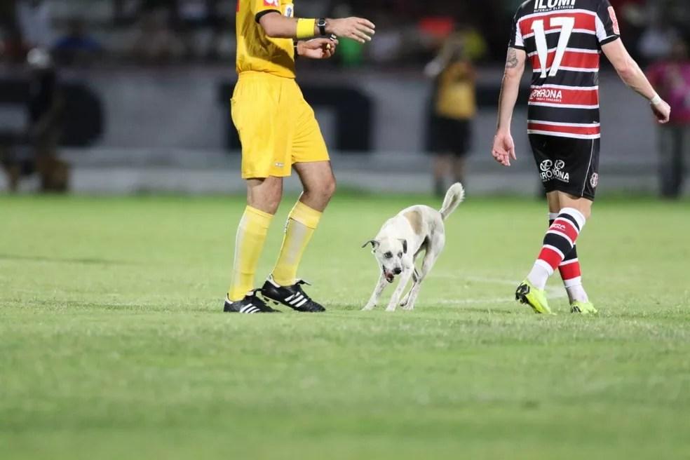 Cachorro driblou também o juiz da partida — Foto: Aldo Carneiro / Pernambuco Press