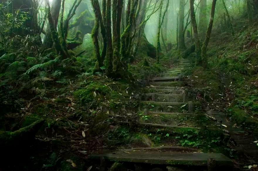 Fotógrafos e florestas (Foto: Justin Jones / Divulgação)