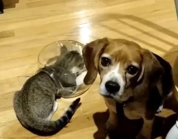 Gato faz sucesso na web ao entalar a cabeça em pequeno aquário (Foto: Reprodução/YouTube/Zach Baranowski)