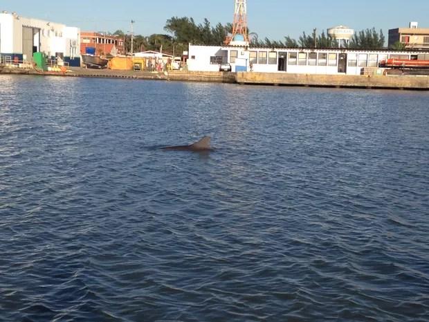 Botos dão sinal aos pescadores nas águas entre Tramandaí e Imbé (Foto: Josmar Leite/RBS TV)