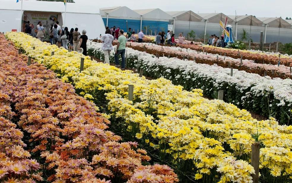 Campo de flores na Expoflora em Holambra (Foto: Fabiano de Bruin )